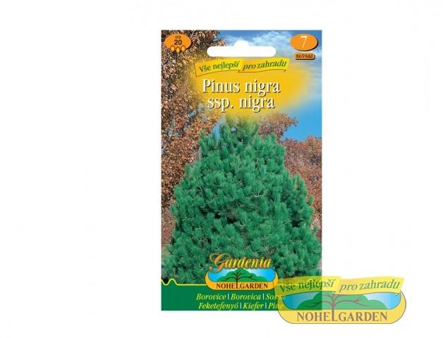Borovice černá - Pinus nigra Počet semen: cca 20 ksBorovice černá je velmi oblíbený druh borovice hlavně v našich zahradách či veřejných místech.Ideální jako solitér i v řadě jako větrolam.Jehličnan se širokou