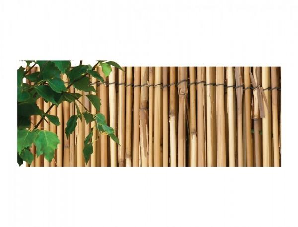 Rohož rákos káva 1 x 5 m Přírodní rohož z loupaného rákosu je karbonizována. Je vhodná jako dekorace na zahradu (ploty apod.) i do interiéru. Lze použít jako zástěnu pro oddělení zahradních zákoutí a tvorbu soukromí nebo k zastínění teras a balkónů. Rohož je ošetřena proti hmyzu a hnilobě. Jednotlivé komponenty (štěpy) jsou svázány galvanizovaným drátem