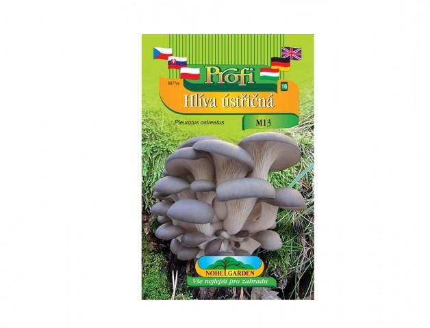 Hlíva ústřičná (Pleurotus ostreatus) šedá Hlíva Ústřičná ( Pleurotus ostreatus) je dřevokazná houba s účinky proti civilizačním chorobám. Hlíva má nezaměnitelné aroma a blahodárné účinky glukanu pleuranu. Zvyšuje odolnost organismu proti virozám a zamezuje či zpomaluje růst některých typů zhoubných nádorů. Rovněž snižuje hladinu cholesterolu v krvi.Jak vypěstovat dřevokaznou houbu Hlívu ústřičnou?Dřevokazné houby můžete pěstovat od jara do podzimu