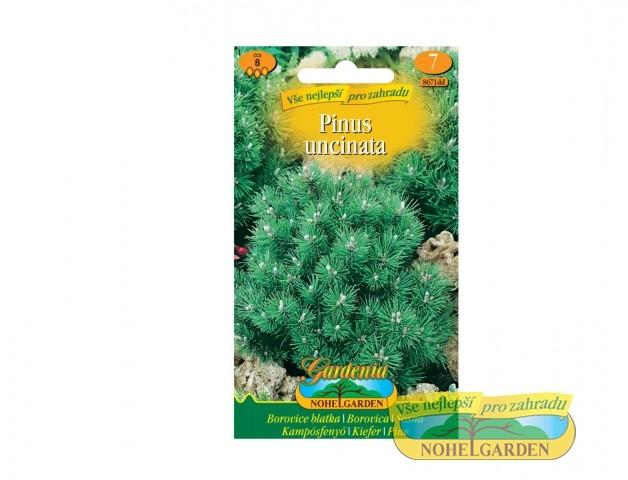 Borovice blatka - Pinus uncinata Počet semen: cca 8 ksZakrslá forma jehličnanu. Světlomilný druh